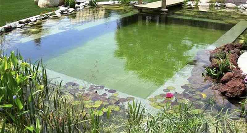 onderhoud zwemvijver grote vijver onderhouden