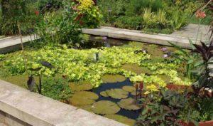 Beplantingsplan vijver: vijver aanplanten