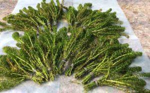 Bosjes zuurstofplanten vijver
