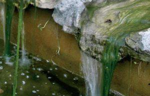 Draadalg bij een waterval
