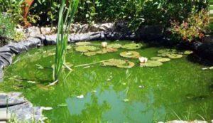 Groene vijver helder maken zweefalgen bestrijden vijverhandboek