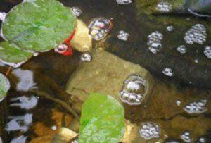 Helder water vijver: waterkwaliteit