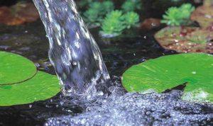 Helder water in de vijver: waterkwaliteit