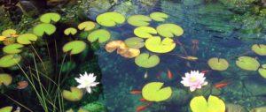 Heldere nieuwe vijver: zuurstofplanten, mineralen, CO2, zonlicht