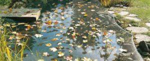 Onderhoud vijver herfst: net tegen herfstbladeren