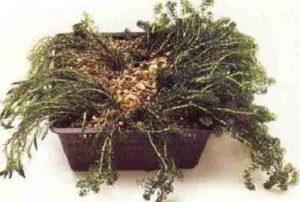 Zuurstofplanten in plantmand