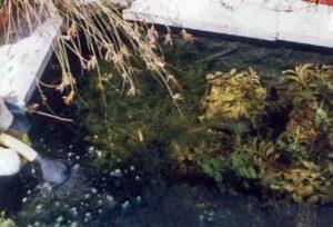 Zuurstofplanten zorgen voor een heldere vijver